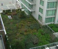 zielonyu dach wieżowca